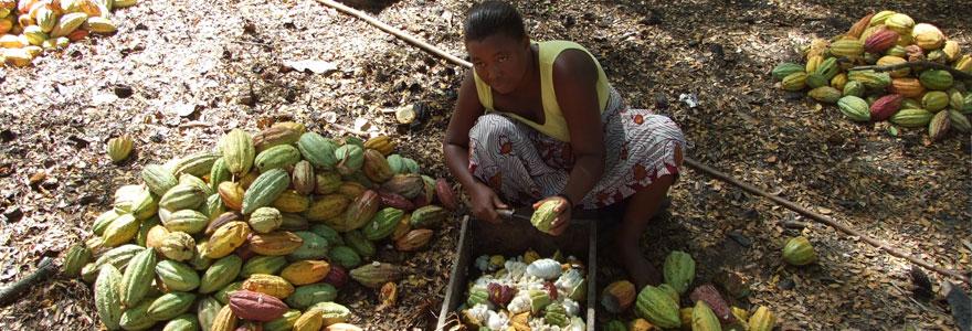 pays de cacao en Afrique